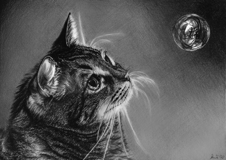 Cat by tajus