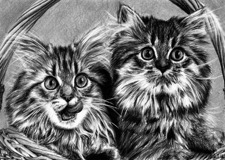 Cats by tajus