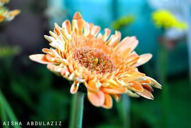 aisha 5 by Aisha-Abdulaziz