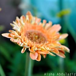 aisha by Aisha-Abdulaziz