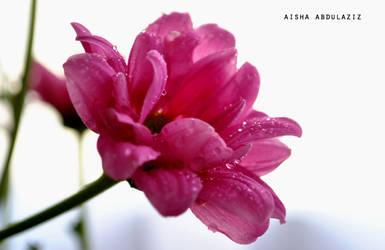 pink by Aisha-Abdulaziz