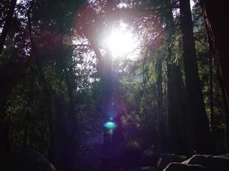 Dark Forrest