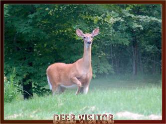 Deer Visitor