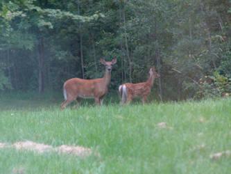 Deer Visitor's kid ...