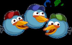 Birds in caps