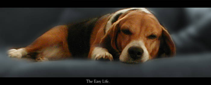 The Easy Life