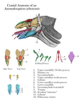 Rattler Cranial Anatomy