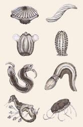Phytozoan Biodiversity Teaser