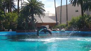 Dolphin Habitat - Flip