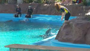 Dolphin Habitat - Yum?