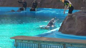 Dolphin Habitat - AAAAAHHHH