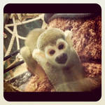 Monkey - Calgary Zoo