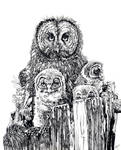 Great Gray Hooters