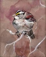 the fluffy thankyou bird by Novawuff