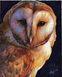 Barn Owl Thanks