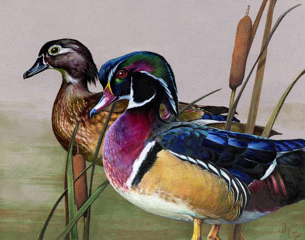 dad ducks by Novawuff