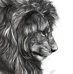 Washes and Lions