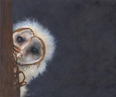 Fuzzy Wuzzy was an Owl by Novawuff