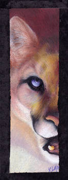 half a cougar