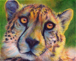 Cheetah Colors by Novawuff