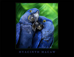 Hyacinth Macaws by Novawuff