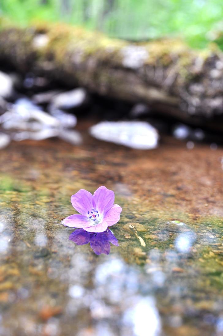 Lonely Flower by LotsOfLowe
