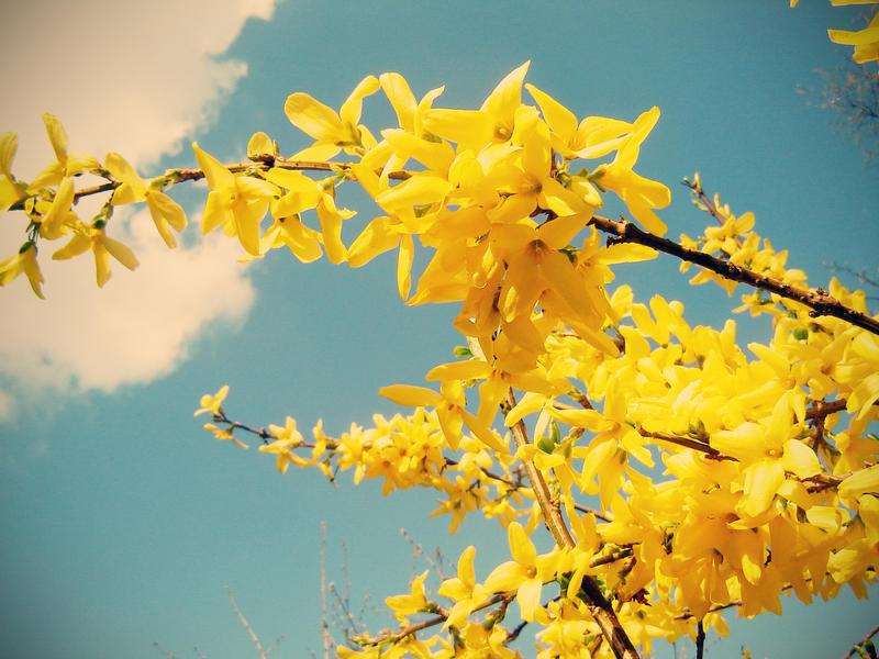 Yellow by Lotart