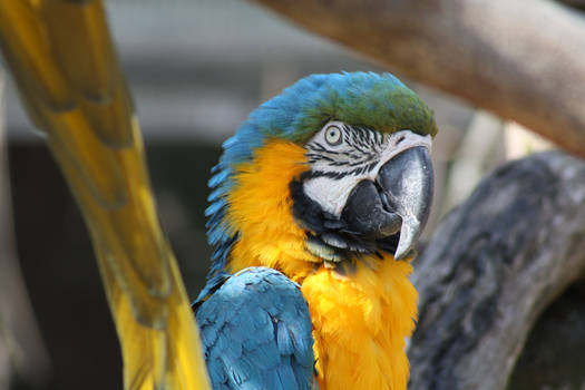 043 - Macaw