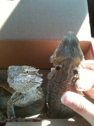 On the car ride there Draco and Vanitas