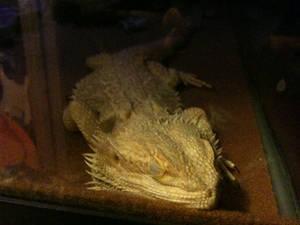 Dragons Be Sleeping