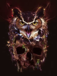 Owl and Skull by Maniakuk