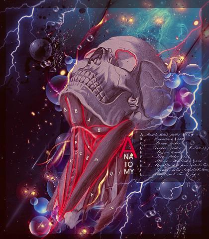 Anatomy Art by Maniakuk