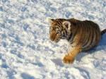 Snow-loving Sweetheart