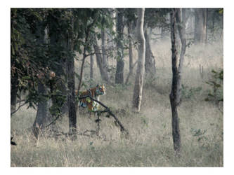 Apparition in the Mist by HeWhoWalksWithTigers