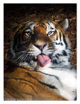 Tiger Malfunction