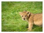 Little Lion, Big World