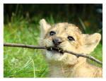 Simba Kills a Stick