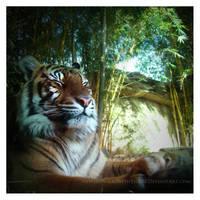 Zen Tiger by HeWhoWalksWithTigers