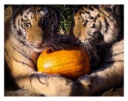 Hug a Pumpkin by HeWhoWalksWithTigers