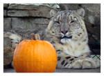 Kush vs the Pumpkin