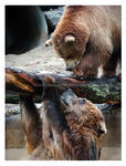 Bearly Hanging On