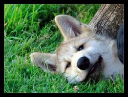 Dog Daze by HeWhoWalksWithTigers