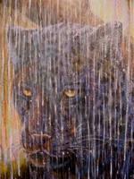 The rainy Season by Wildatart24
