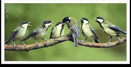 نکات آموزش عکاسی از پرندگان