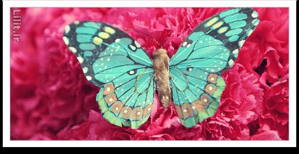 نکات آموزش عکاسی از حشرات