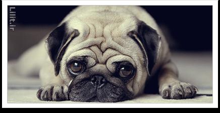 نکات آموزش عکاسی از حیوانات خانگی