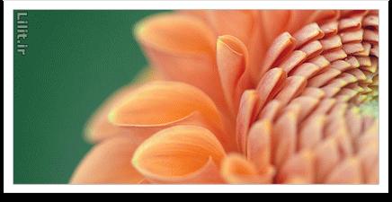 نکات آموزش عکاسی از گل و گیاه