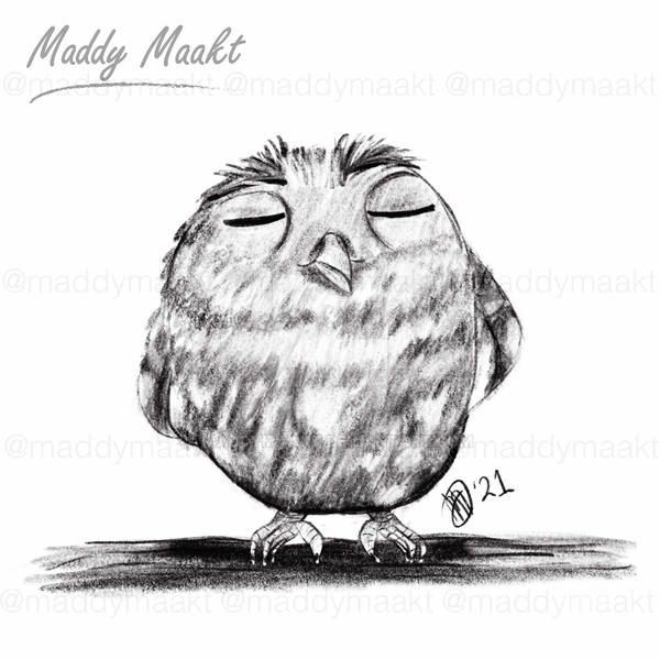 Sketches - Owl