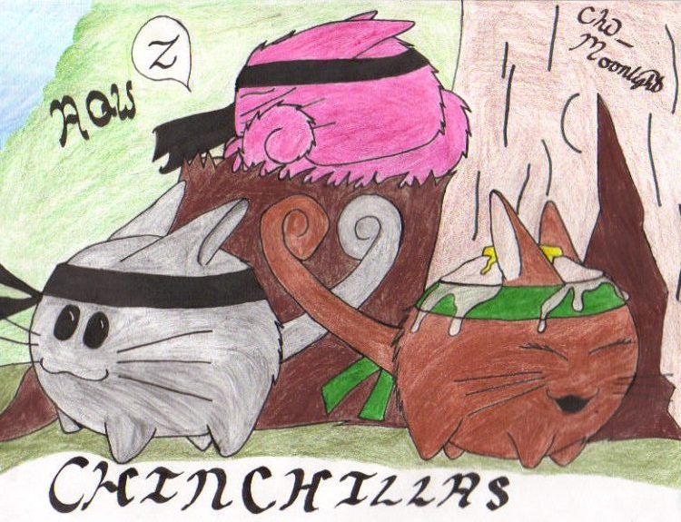 AQW's Chinchillas by distroflives