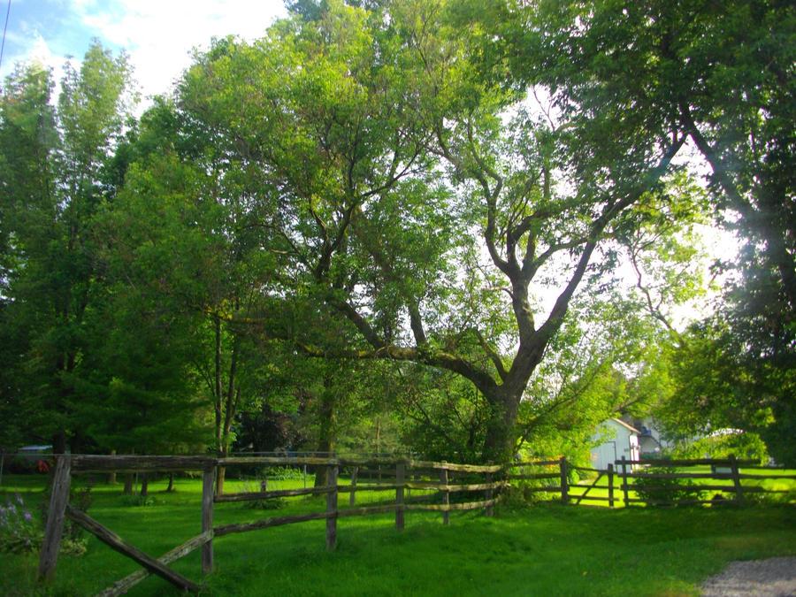 backyard tree by MorningGlory21 ... - Backyard Tree By MorningGlory21 On DeviantArt